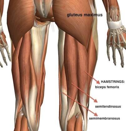 De hamstring bestaat uit drie spieren. Bij mij ging het om de middelste spier.